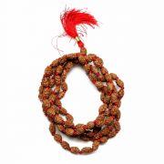 2 Mukhi Rudraksha Mala (Indonesia) (108+1 Beads) GJSPC Certified